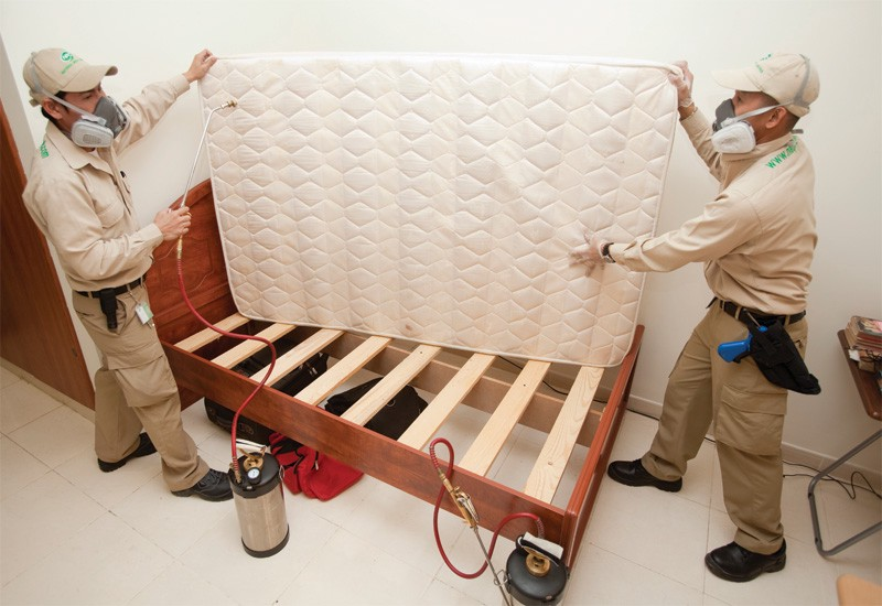 Bed Bug Exterminator  – Things To Know